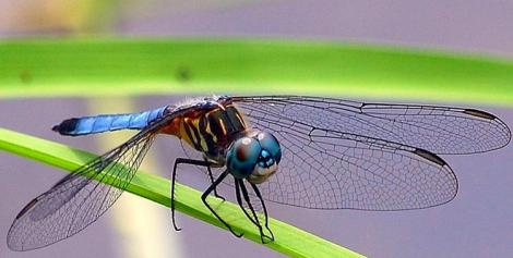 fly and balancing